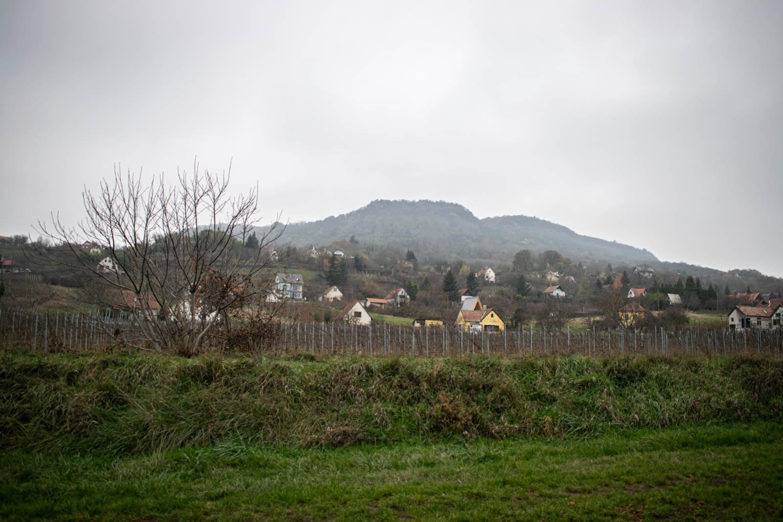fischer_birtok_wineshop_2